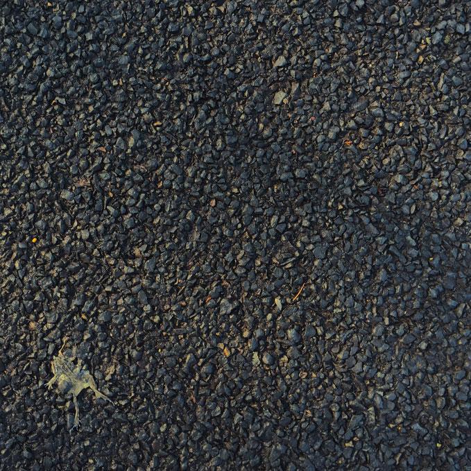 roadkill.jpg