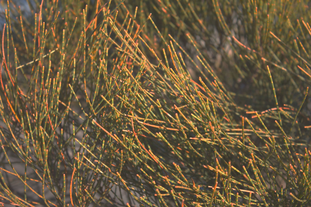 seagrasses.jpg
