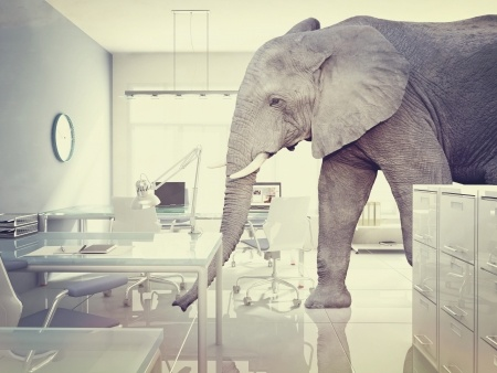 Elephant-16548871_s.jpg