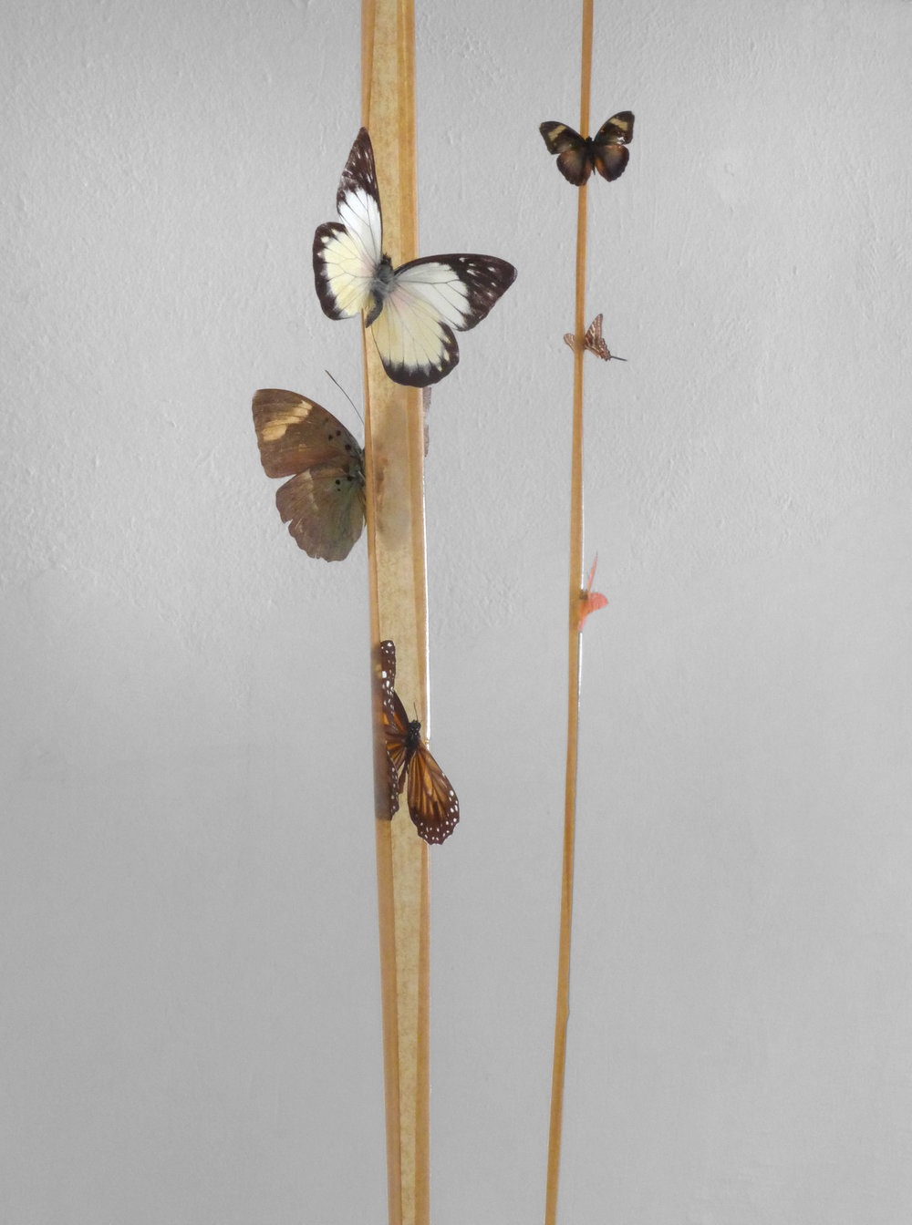 01_-La Chasse Aux Papillons (Butterflies Hunting)- Fly paper, butterflies variable size, 2016- (1).jpg