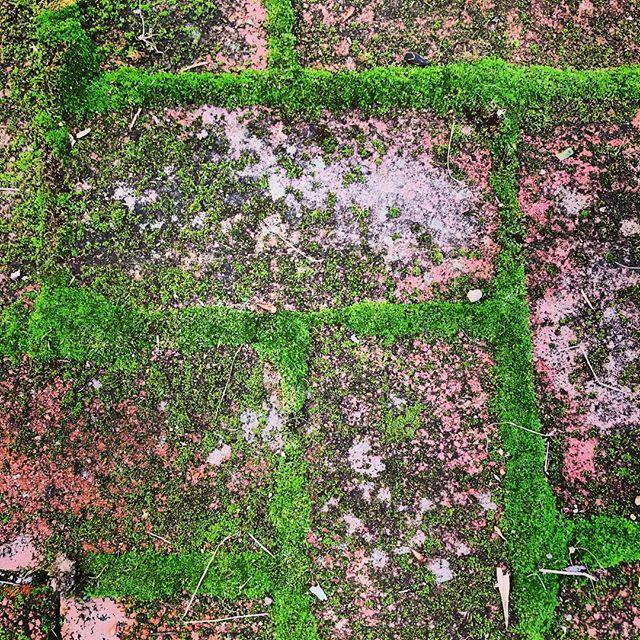 #brickbybrick #mossgrowsfatonarollingstone #crackedup #linearts