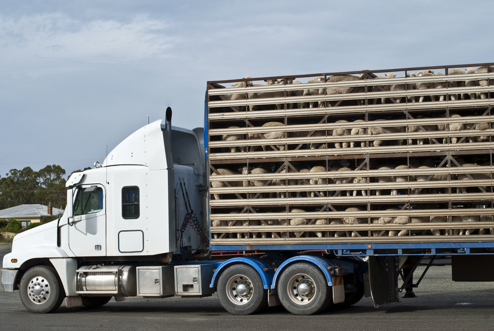Livestock haulers were set to panic this Sunday, March 18th when the temporary 90 day ELD waiver expires. On Tuesday, the FMCSA announced another 90 day extension while they figure out a solution.