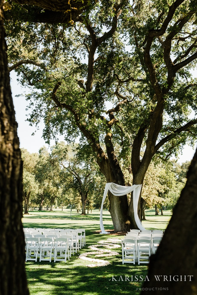Large Tree for the Wedding Ceremony