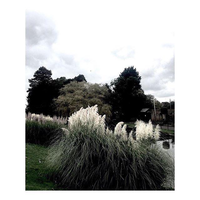 Grey skies but Hampstead Heath is still beautiful. . #Tricouni #LuxuryThatPerforms #weatherproof #waterproof #hampsteadheath #inspiredbynature