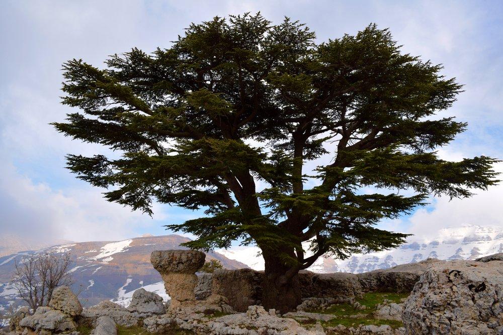 Reserva natural de Cedros de Tannourine