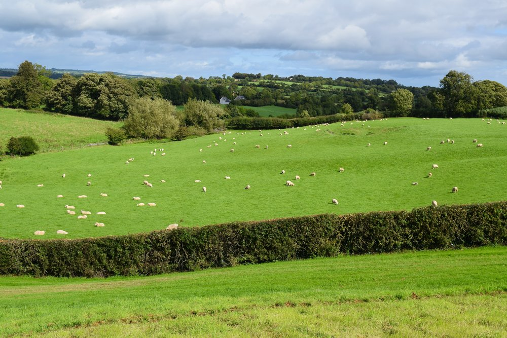 Typical Irish landscape