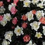 floralia.jpg