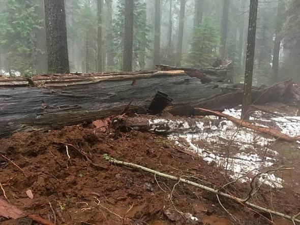 Restos del tronco de la secuoya Pioneer, tras la tormenta del pasado lunes (Jim Alley)