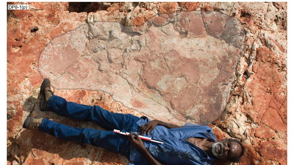 La huella de un saurópodo de 1.7 metros comparada con un aborigen.