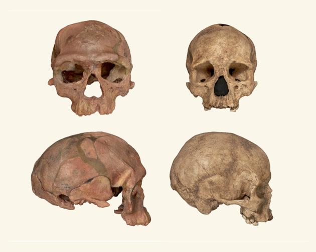 A la izquierda los restos de Homo Sapiens, a la derecha los de un humano moderno.