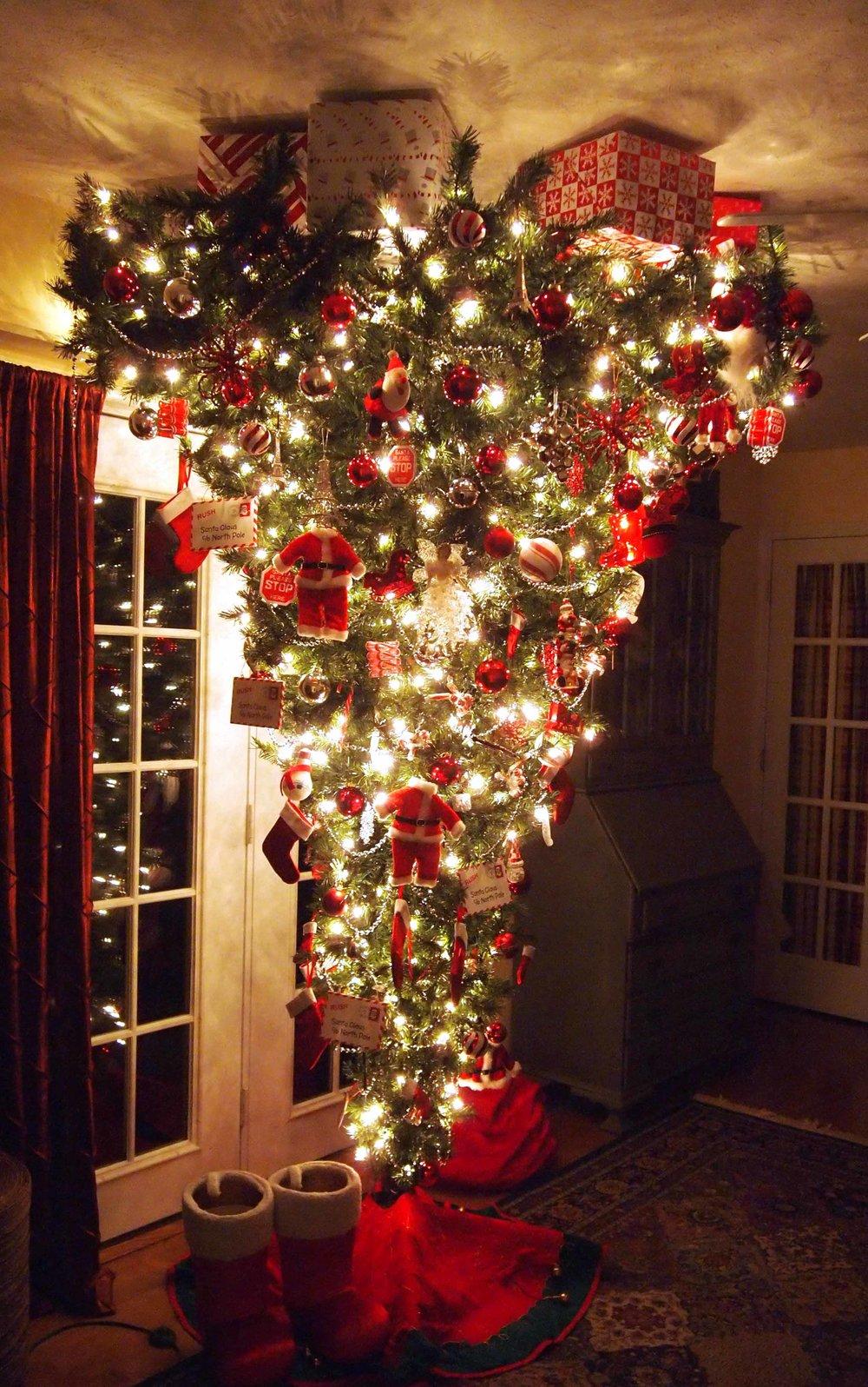 Australian-Christmas-Tree-.jpg