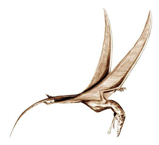 Eudimorphodón, un tipo de pterosaurio