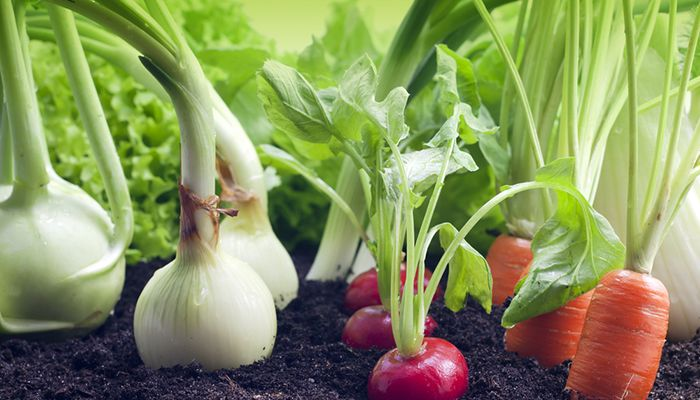 ejemplos-de-hortalizas.jpg