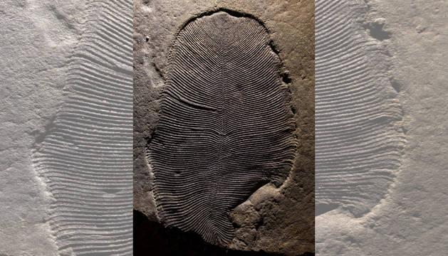 _fosil_154cac2a.jpg