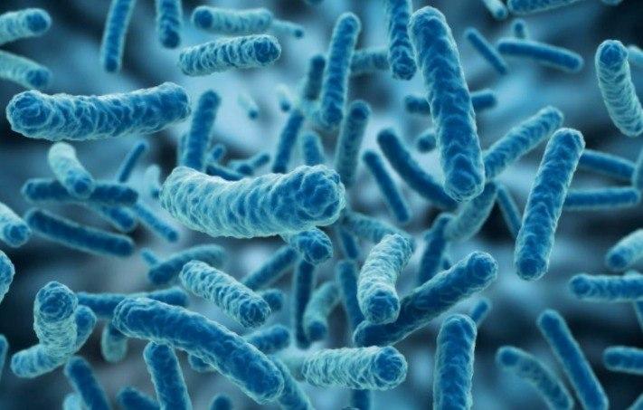 bacterias-del-ácido-láctico.jpg