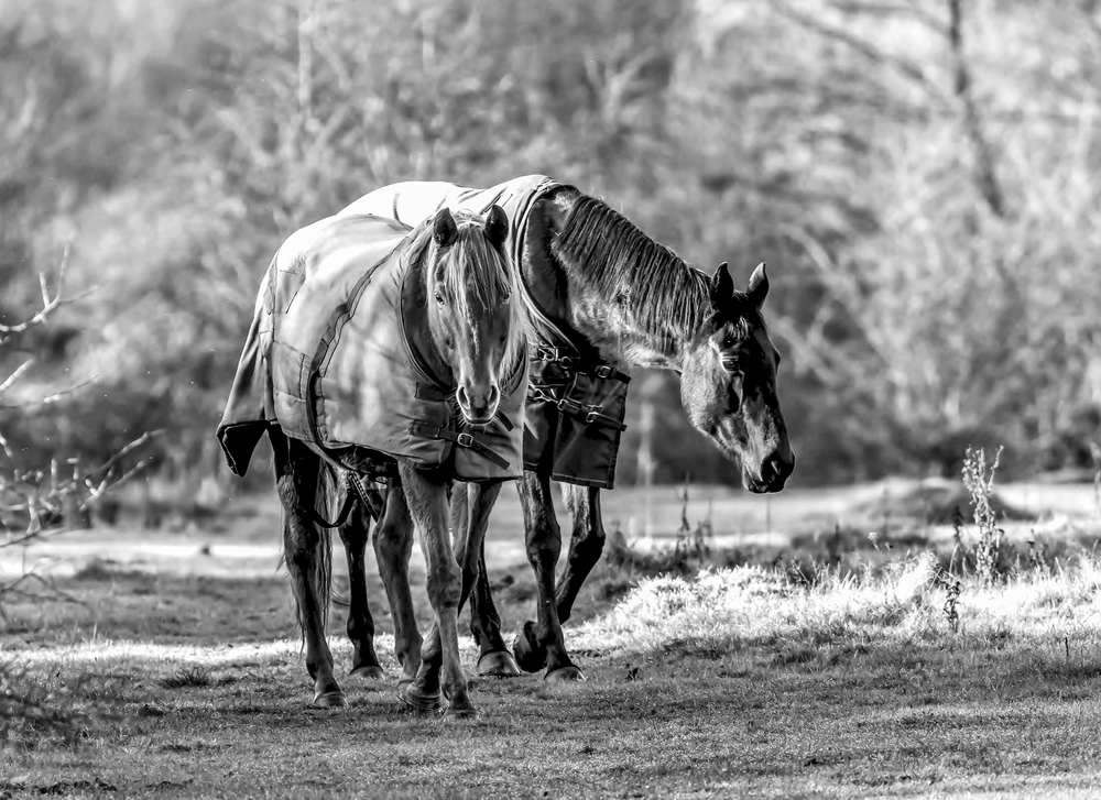 Horses in the winter sunshine