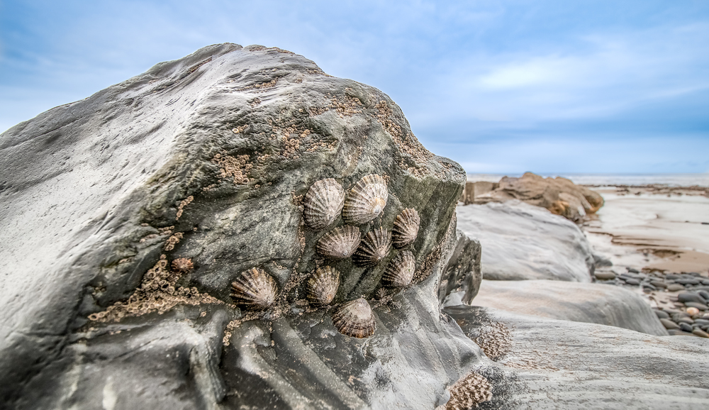 Rocks and Limpets