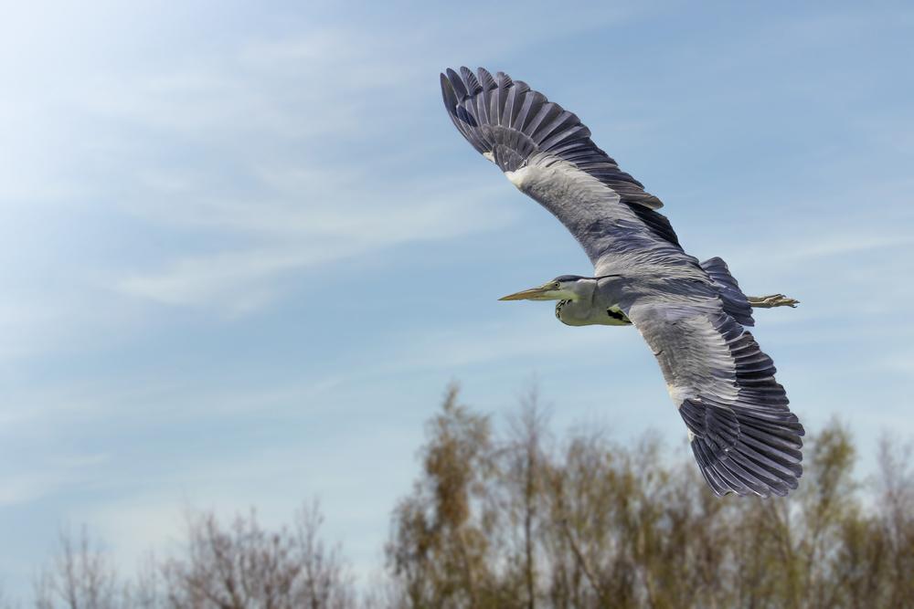 Fabulous wingspan!