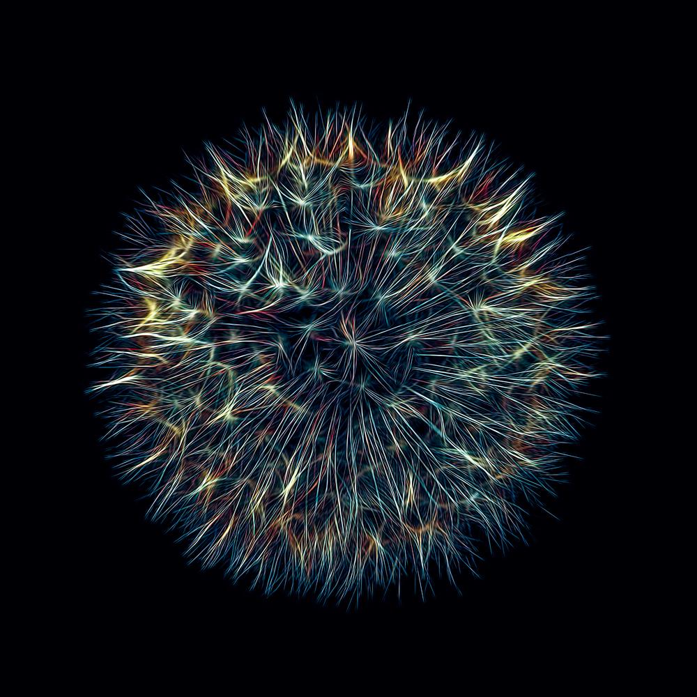 Dandelion Seedhead abstract