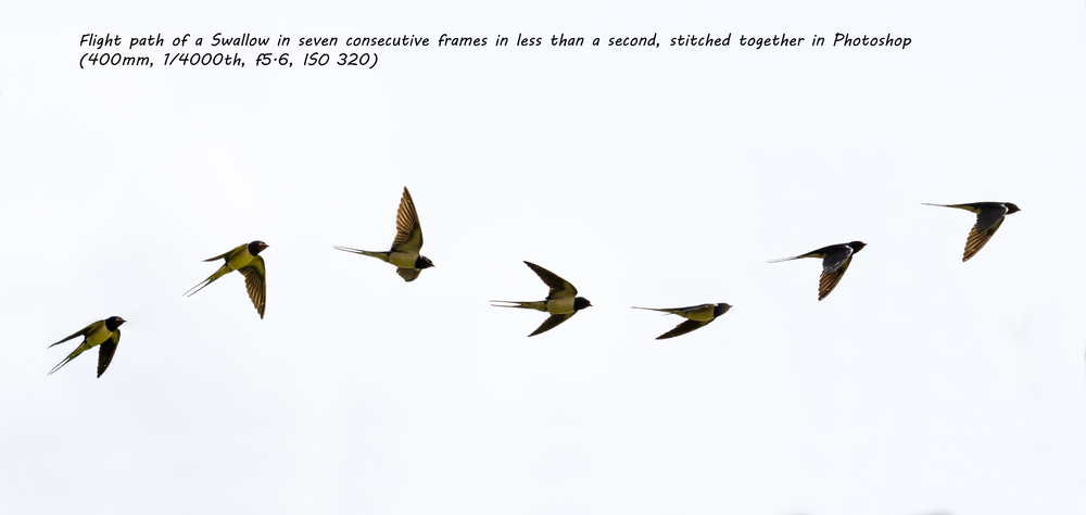 The flight path of a Swallow