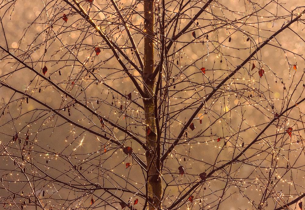 Winter tree in the winter sunshine