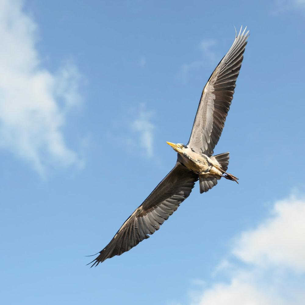 A fantastic wingspan!