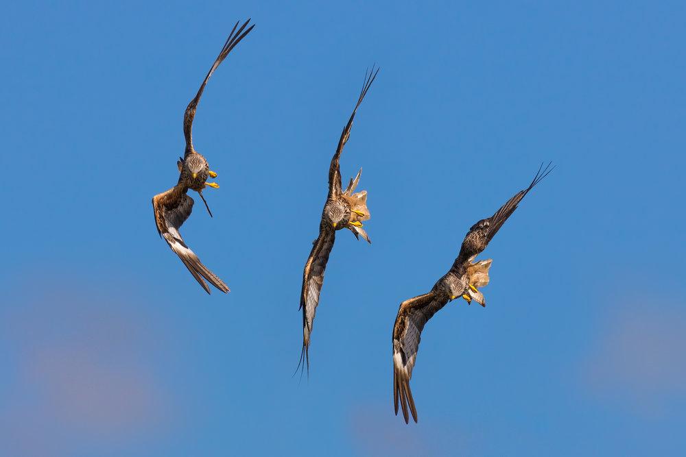 A three-shot sequence
