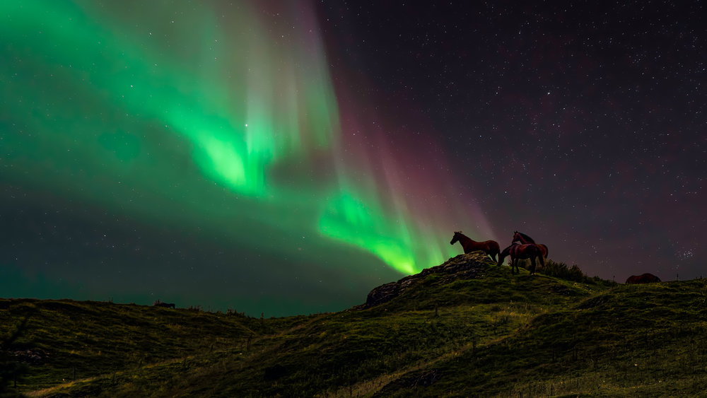 Horses at Bwlch (composite)