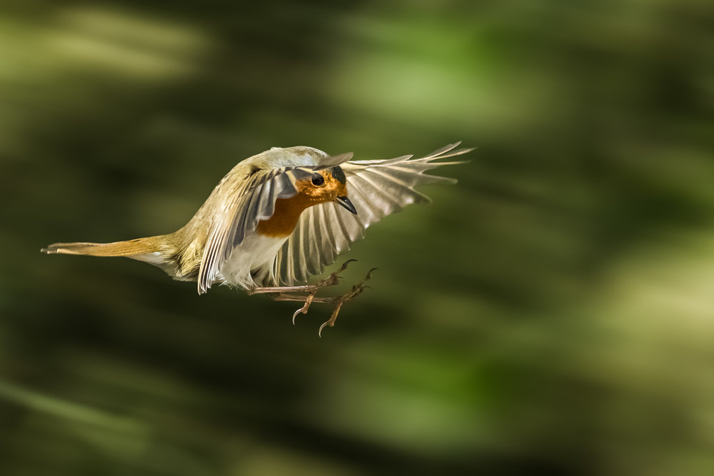 Coming into land at speed!