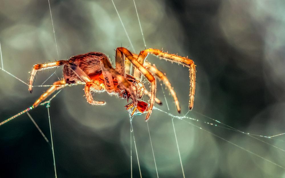 Orb Spider working