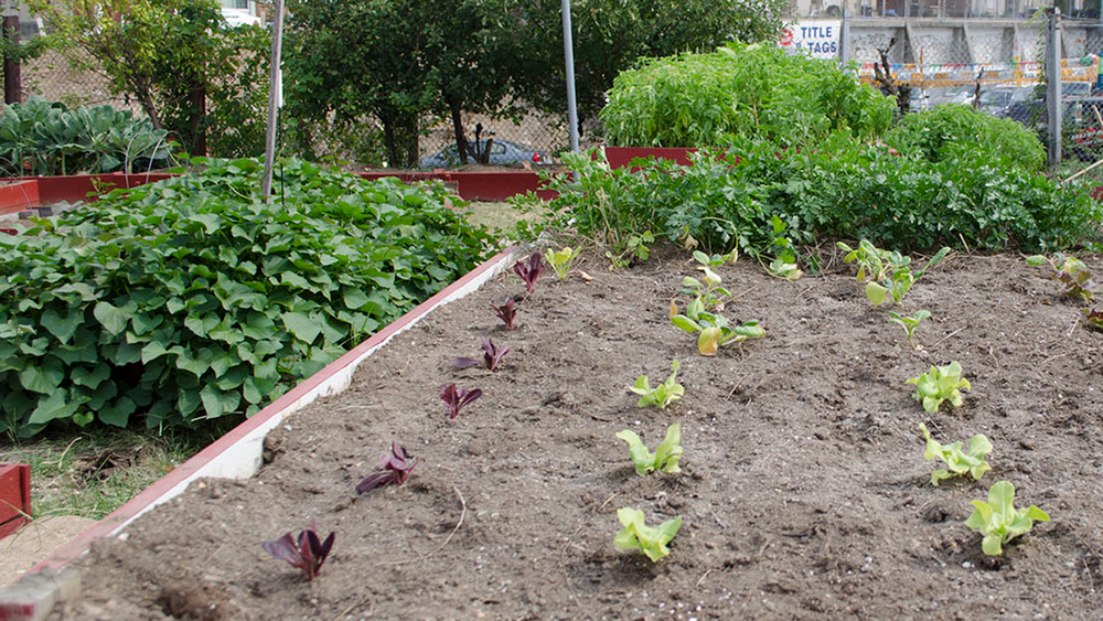 Rejuvenate your soil   ideal for raised beds