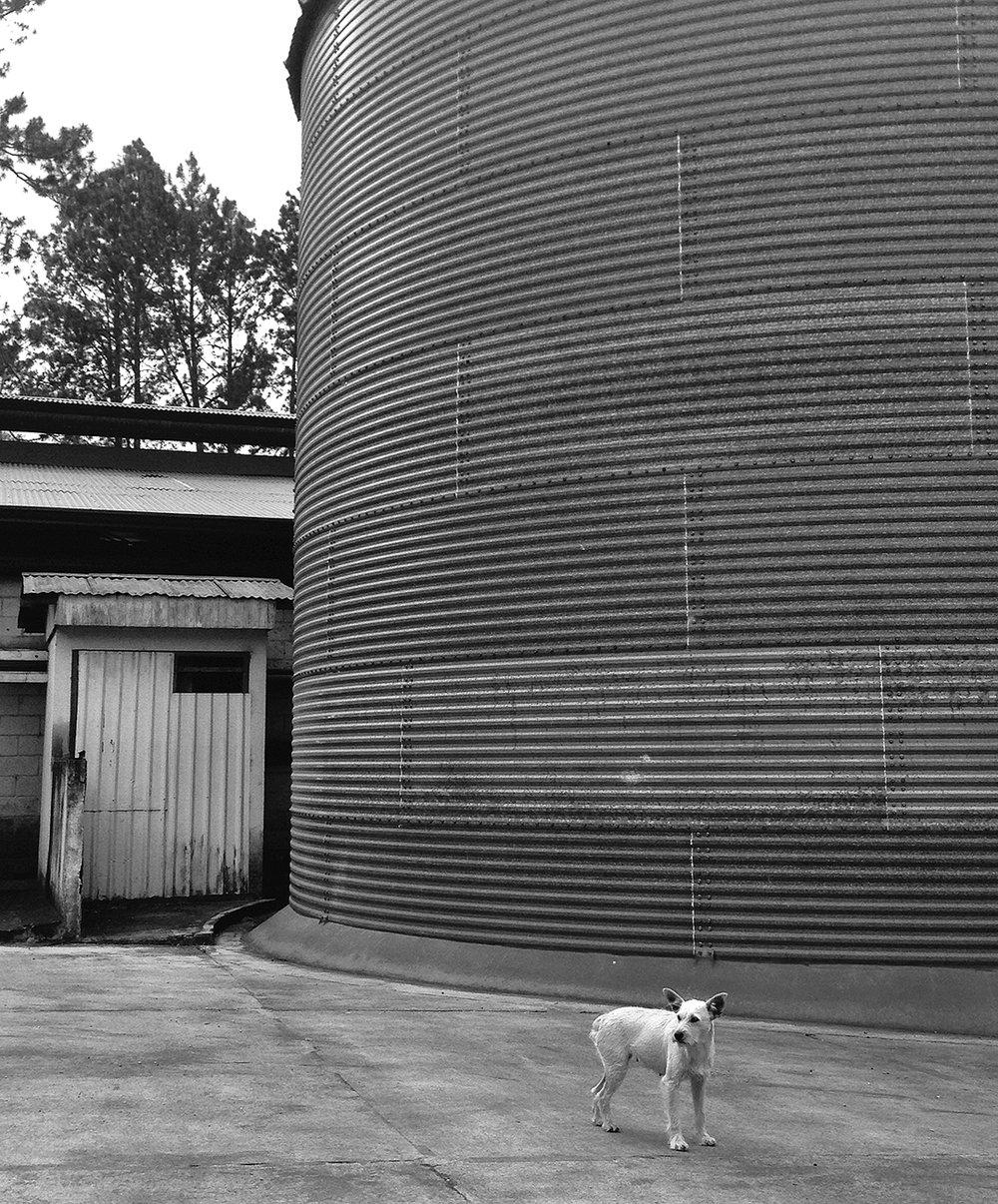 silo dog bw.jpg