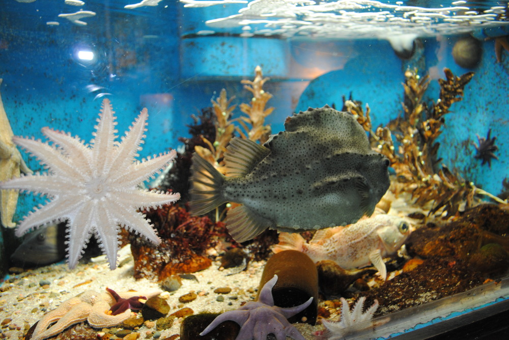 Established in Woods Hole in 1885, the WHSA is the country's oldest marine aquarium. It is owned by the federal government and operated by NOAA's National Marine Fisheries Service, in partnership with the Marine Biological Laboratory.
