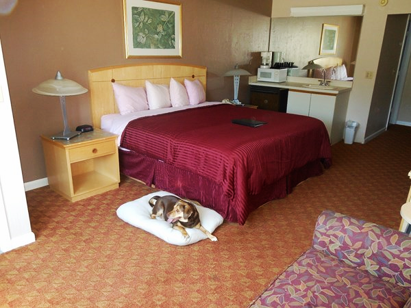 Pet Friendly One King Bed The Admiralty Inn Suites
