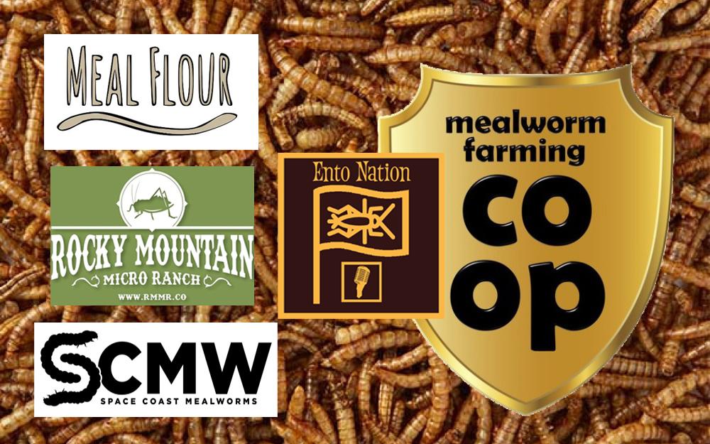 Mealworm-Panel-pic.jpg