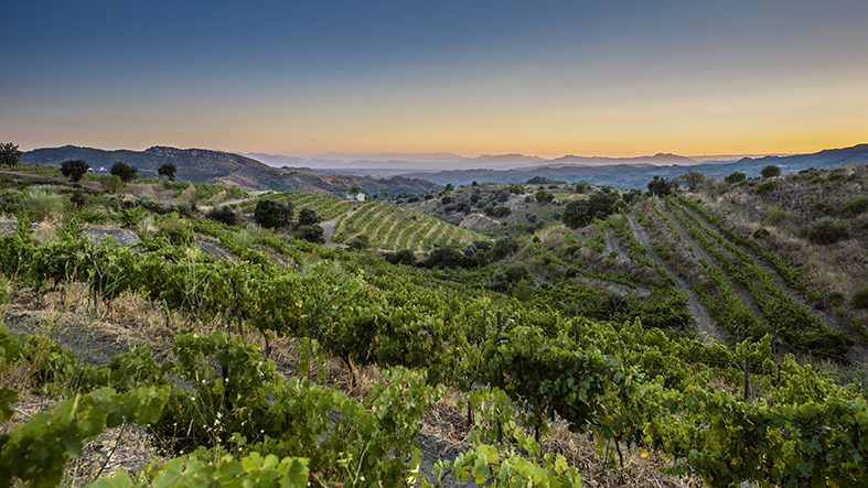 The rugged terraced hills of Priorat.
