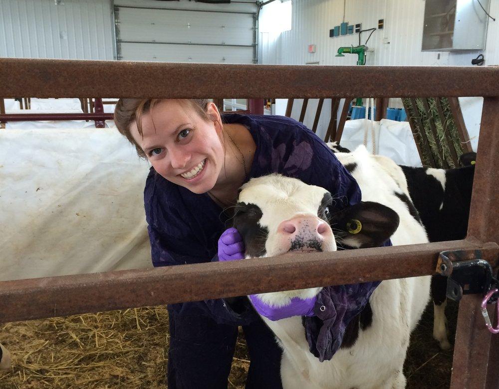 Caroline and calf.JPG