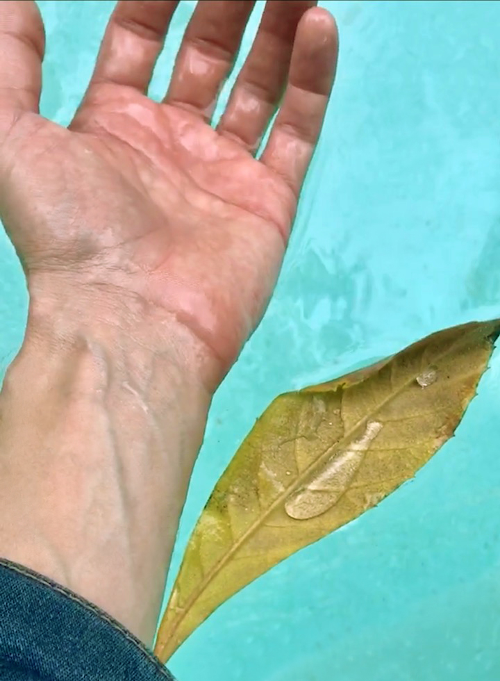 The veins of a leaf and the veins on your body prove a similar design.You don't have to believe in a higher intelligence. You can just see it at work. -