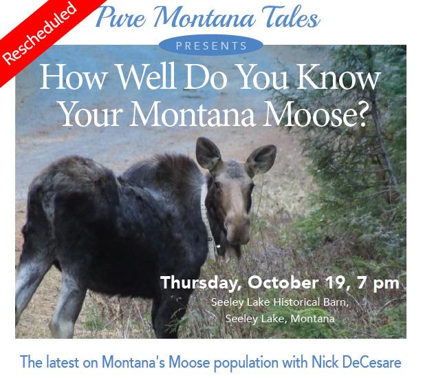 PMT Moose