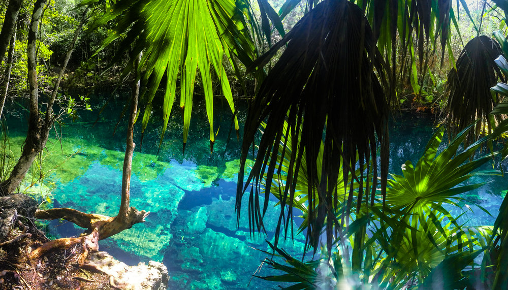 Cenote Escondido, Tulum, MX. I jumped off my bike and walked 100 ft up to the cenote and peered through the trees to find this bright blue paradise. It didn't take much for me to jump in the water.