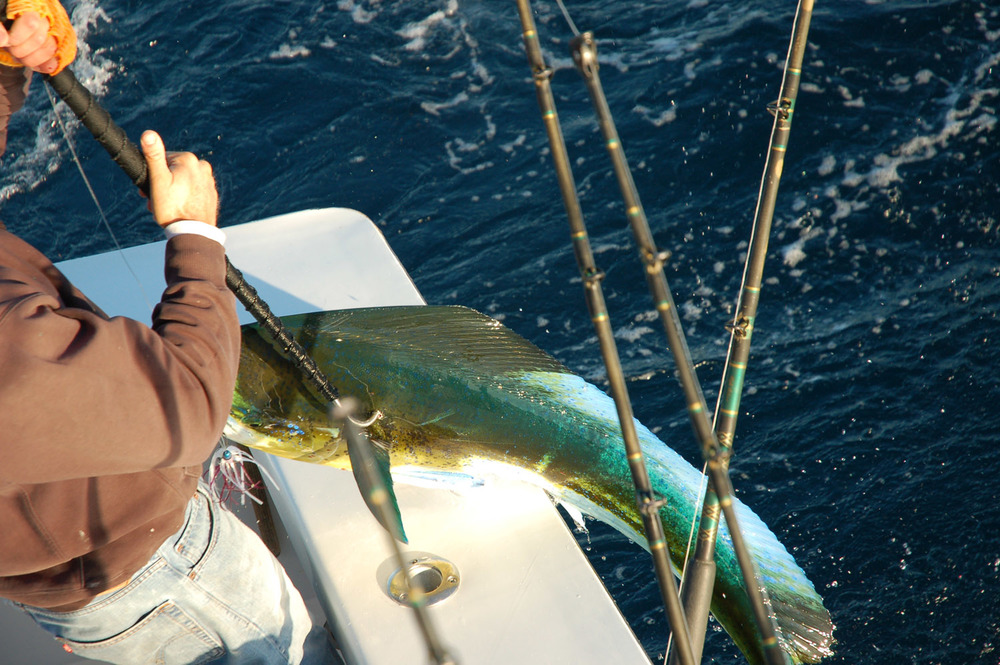 High Return Sportfishing - 74.jpg