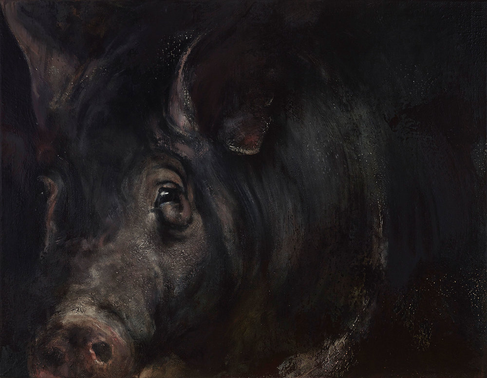 "Pig 2013, oil on canvas, 28""x36"""