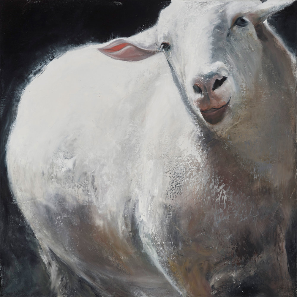"""Sheep 2016, oil on canvas, 40""""x40"""""""