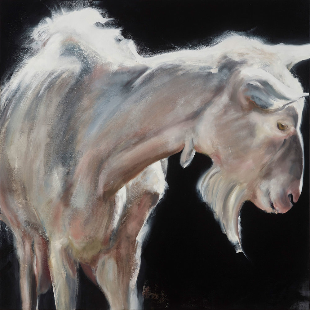 """Goat 2016, oil on canvas, 40""""x40"""""""