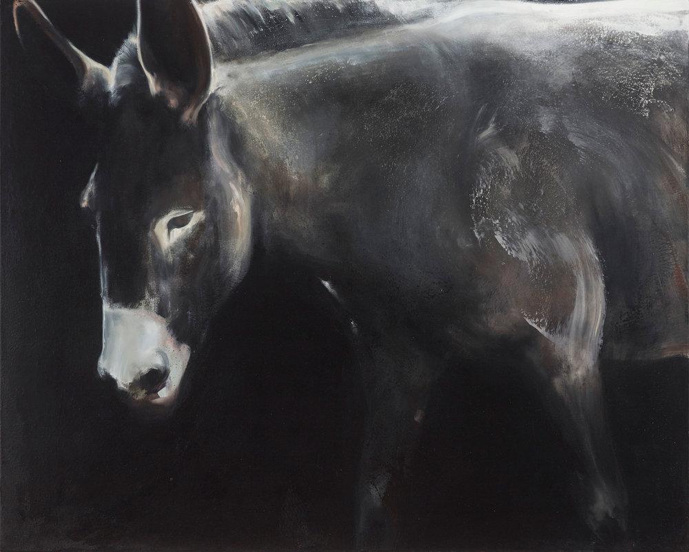 "Mule 2016, oil on canvas, 40""x40"""