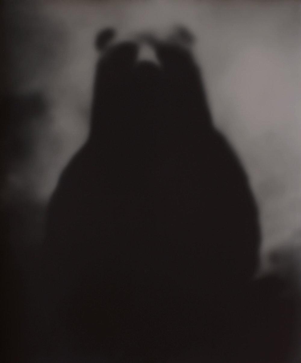 Bear, 1996 Gelatin Silver Print, 24 x 20 in.