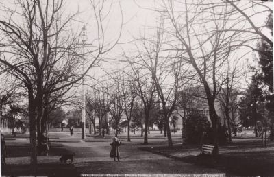 Walnut trees, laid out in a grid, were an early feature of Walnut Park. Photo courtesy of the Petaluma Historical Museum and Library.