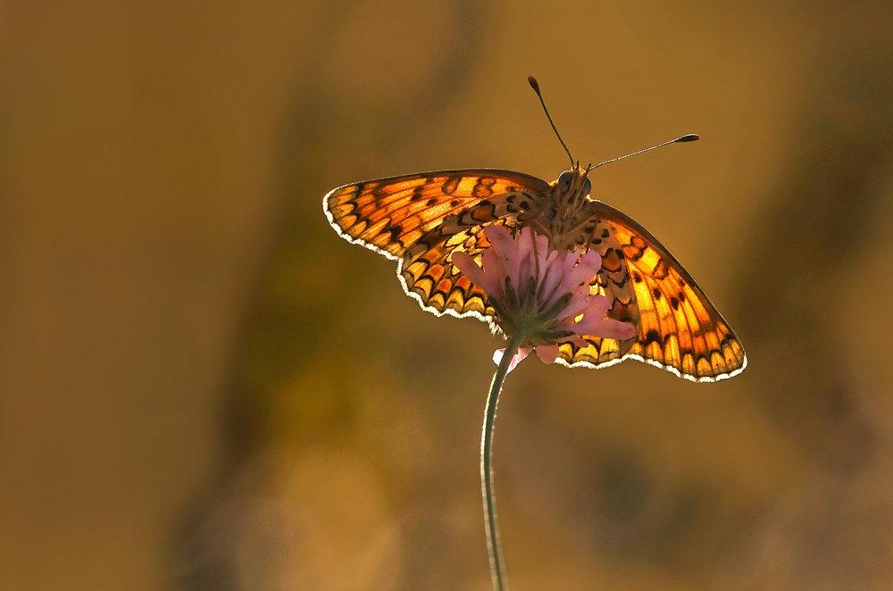 Nature-33.jpg