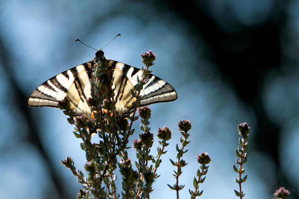 Nature-81.jpg