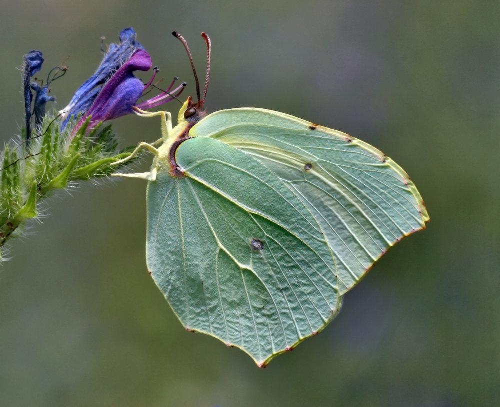 Nature-87.jpg